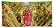 Pineapple Plant Ananas Pico Island Azores Portugal Beach Sheet