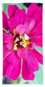 Pink Zinnia With Spider Beach Towel