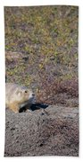 Prairie Dog 1 Beach Towel