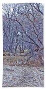 Prescott Arizona Watson Lake Bayou Trees Scrub Water Grasses 3142019 4916 Beach Towel