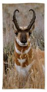 Pronghorn In The Sage Beach Towel