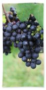 Purple Grape Bunches 20 Beach Towel