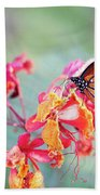 Queen Butterfly On Mexican Bird Of Paradise  Beach Towel