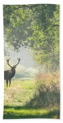 Red Deer In The Forest Beach Towel