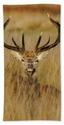 Red Deer Portrait 2 Beach Towel