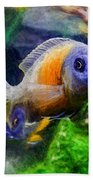 Red Fin Borleyi Cichlid Beach Towel by Don Northup