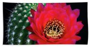 Red Hot Torch Cactus  Beach Towel
