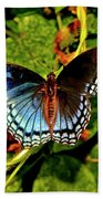 Red-spotted Purple Butterfly 017 Beach Towel