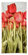 Red Tulip Field In Portrait Format. Beach Sheet