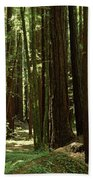 Redwood Trees Armstrong Redwoods St Beach Towel