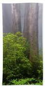 Redwoods By Crescent City 7 Beach Towel
