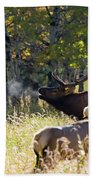 Rocky Mountain Bull Elk Bugeling Beach Towel by Nathan Bush