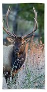 Rocky Mountain Wildlife Bull Elk Sunrise Beach Towel by Nathan Bush