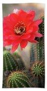 Rose Quartz Cactus Flower  Beach Towel