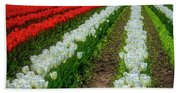 Rows Of White And Red Tulips Beach Towel