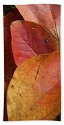 Sassafras Autumn Beach Towel
