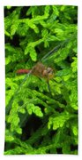 Scarlet Darter Male Dragonfly Beach Towel