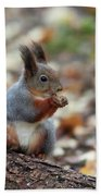 Shadow Boxing. Red Squirrel Beach Towel