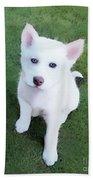 Siberian Husky Puppy A030619 Beach Towel by Mas Art Studio