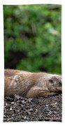 Sleeping Prairie Dog Beach Towel by Scott Lyons