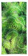 Snake Cactus Beach Sheet