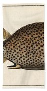 Spotted Trunk Fish  Beach Towel