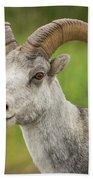 Stone's Sheep Ram Portrait Beach Sheet