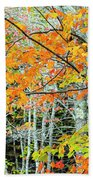 Sugar Maple Acer Saccharum In Autumn Beach Towel