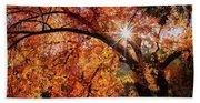 Sun Peaking Through The Autumn Colors  Beach Towel
