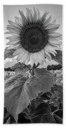 Sunflowers 10 Beach Sheet