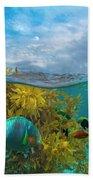 Surf Parrotfish, Damselfish And Basslet Beach Towel