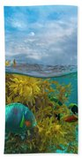 Surf Parrotfish, Damselfish And Basslet Beach Sheet