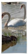 Swan Family Outting  Beach Towel