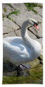 Swan Study 14 Beach Towel