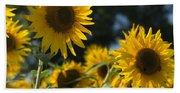 Sweet Sunflowers Beach Sheet