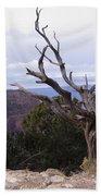 Swirly Tree Beach Sheet