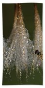 Syrphid Fly On A Dewy Morn Beach Towel by Daniel Reed