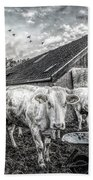 The Cows Came Home Black And White Beach Towel