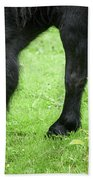 The Grass Is Greener Here. The Black Pony Beach Towel