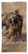 The Take Down - Lions Attacking Cape Buffalo Beach Towel by Alan M Hunt
