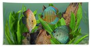 Three Discus Fish Beach Sheet