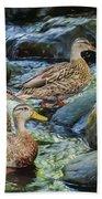 Three Mallard Ducks Swimming In A Stone Filled Brook. Beach Towel