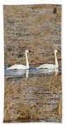Three Trumpetor Swans 0629 Beach Towel