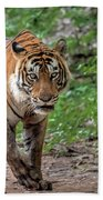 Tiger On A Stroll Beach Towel