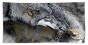 Timber Wolves Up Close Beach Towel