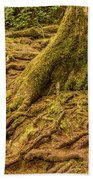 Trail Of Roots Beach Towel