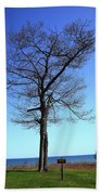 Tree And Great Lake Beach Towel
