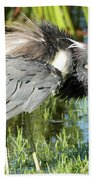 Tricolored Heron With Ruffled Feathers Beach Sheet