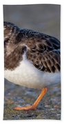 Turnstone Beach Towel