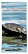 Turtles - Mother And Child Beach Towel